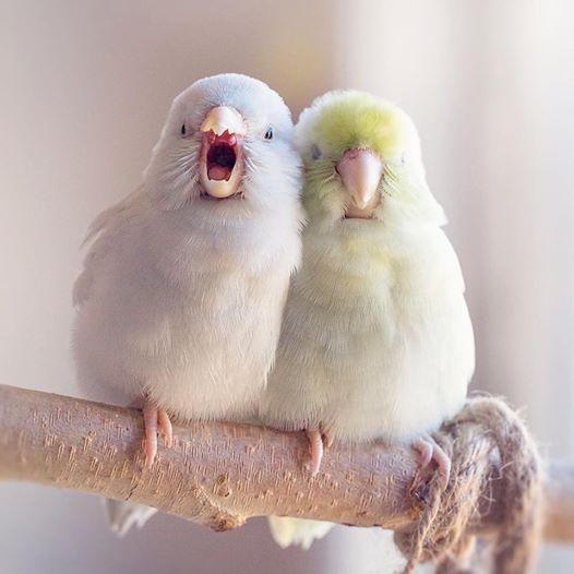 Besitzerin dokumentiert Liebe ihrer Papageien in Bildern.