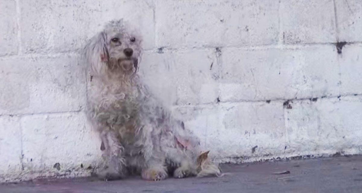 Dieser Hund wurde überfahren ... Eine Geschichte, die man ohne Tränen nicht lesen kann