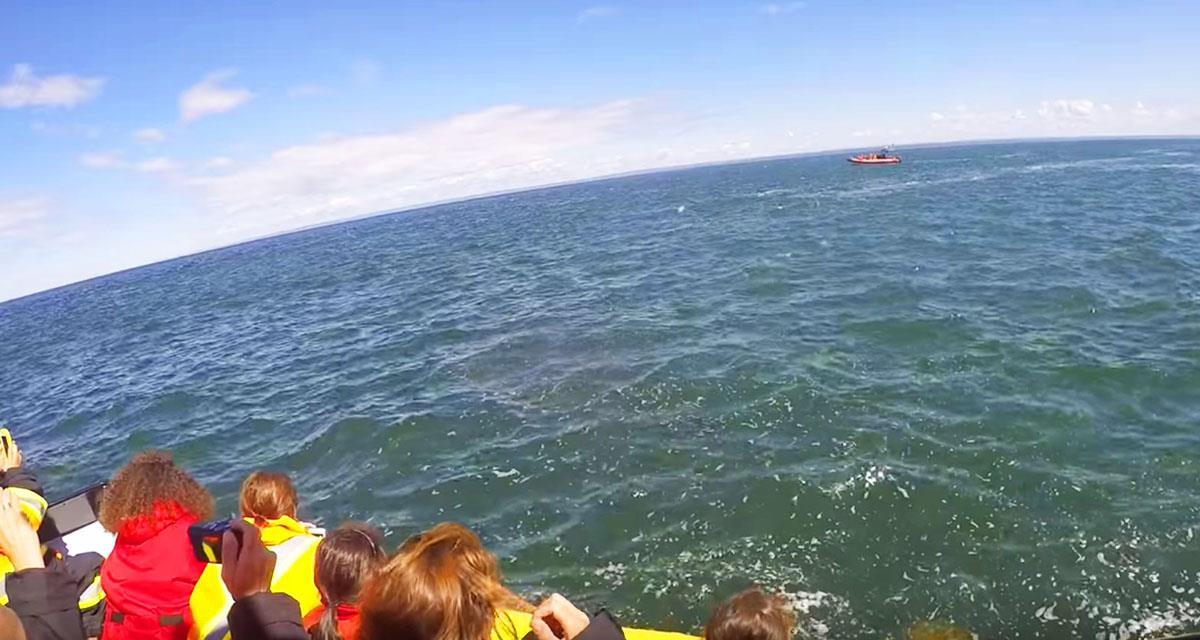 Ein riesiger Wal entschied sich, mit Touristen zu scherzen. Seht nur, was das Meerestier getan hat!