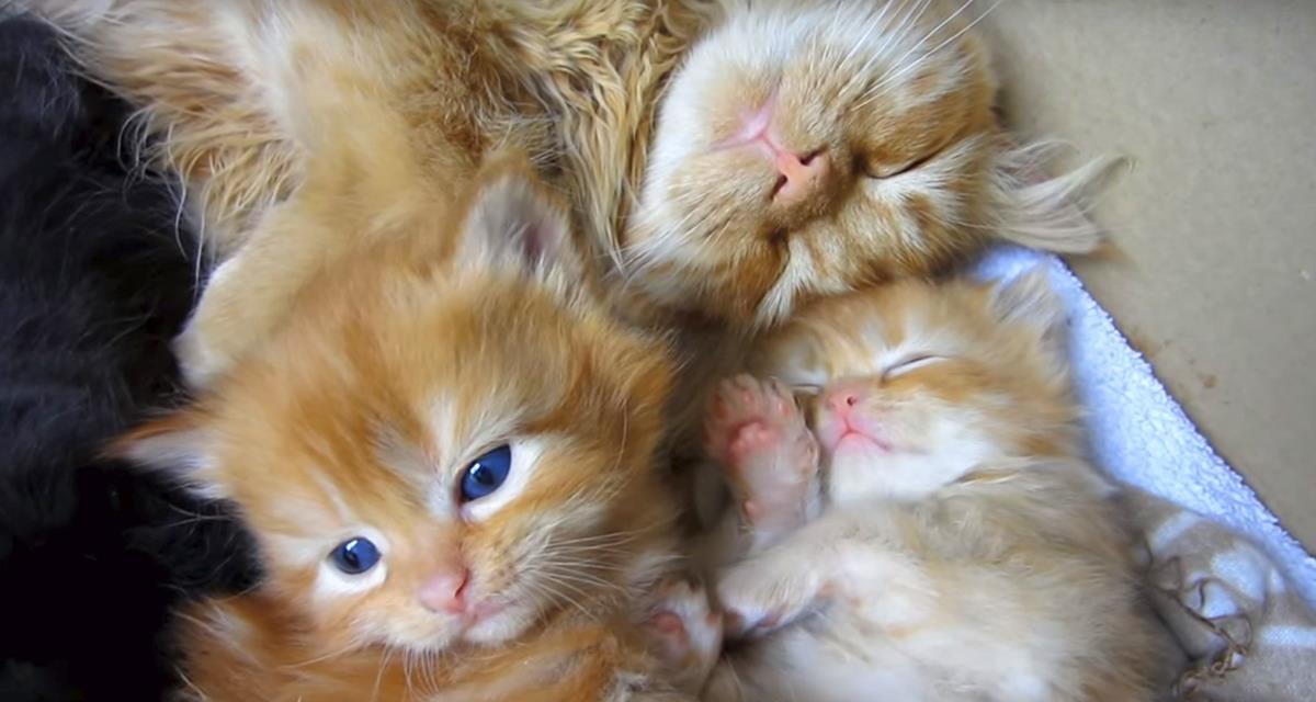 Die Kätzchen sahen zuerst ihren älteren Bruder. Die Reaktion der Kinder ist fantastisch!