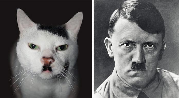 15 Katzen, die uns immer an jemanden erinnern