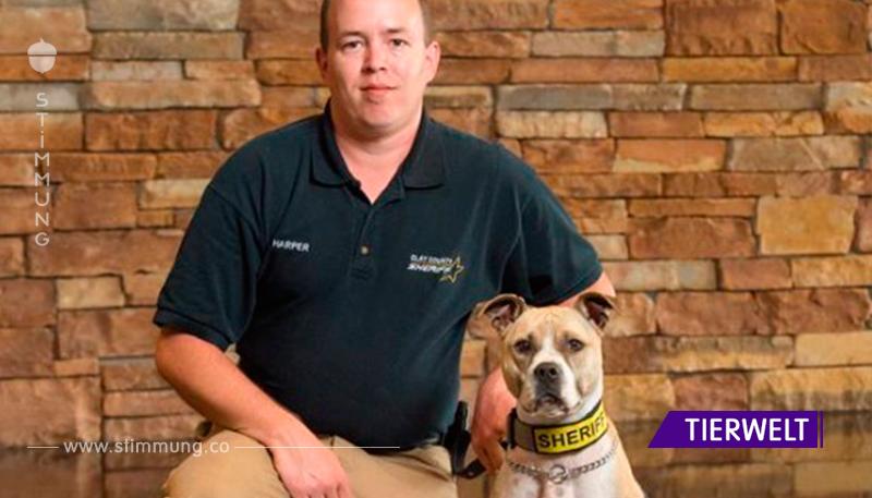 "Keine ""Kampfhunde"": Beamte sind stolz auf Pitbull-Kollegen."
