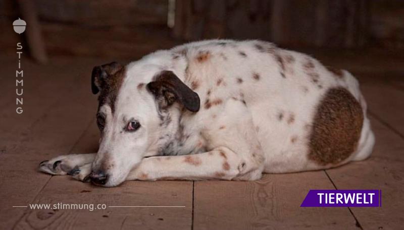 20 Hunde, die das Alter nicht kleingekriegt hat.