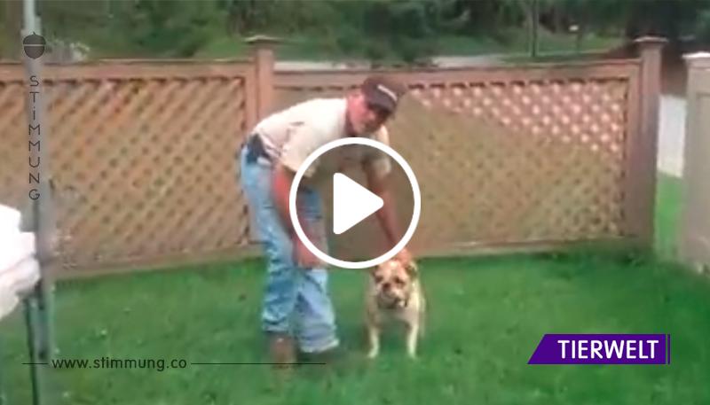 Der Besitzer hebt seinen Hund auf das Trampolin, und das endet in einem hysterisch lustigen Video