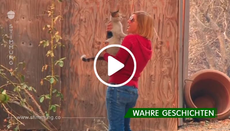 Besitzerin dachte, ihre Katze sei im Feuer umgekommen – doch dann hört sie ein bekanntes Geräusch