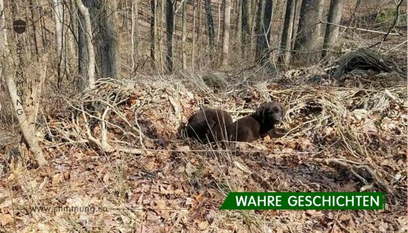 Jogger hören merkwürdige Geräusche im Wald – weil sie genauer nachforschen, retten sie fünf Leben
