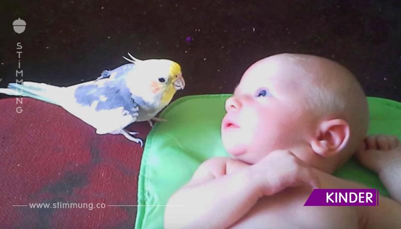 Der Papagei singt ein Wiegenlied für ein neugeborenes Baby. Einfach schön!