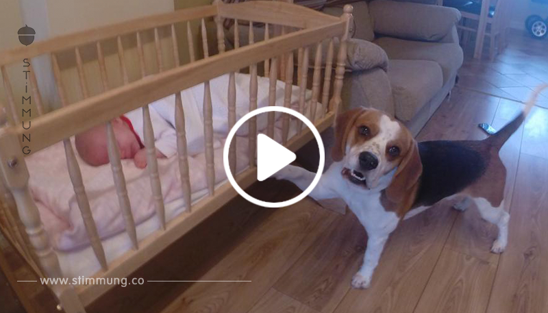 das baby weint aber selbst die mutter ist berrascht auf welche l sung der familienhund kommt. Black Bedroom Furniture Sets. Home Design Ideas