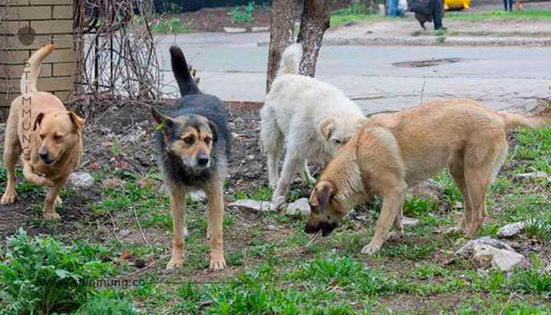 Er hört ein Geräusch und sieht 4 Hunde – Was sie aber beschützen, beschert ihm den Schreck seines Lebens.