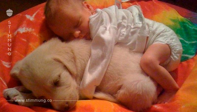 15 Bilder die uns zeigen, dass Kinder mit Hunden aufwachsen sollten – Nr. 4 ist nicht zu übertreffen!