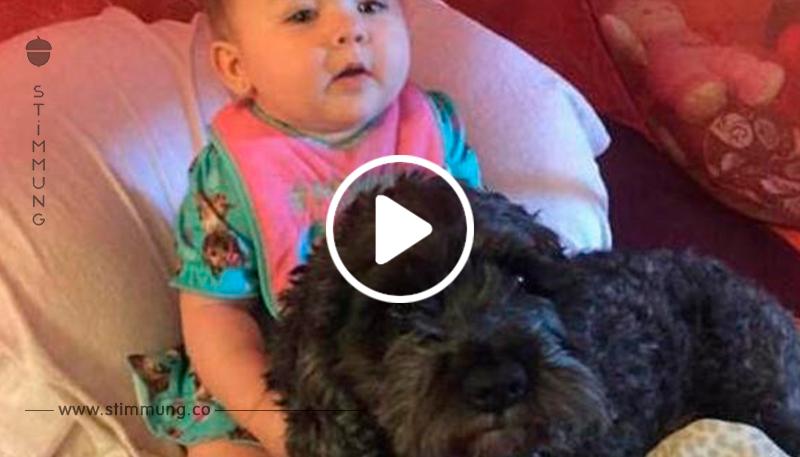 Die Mutter dachte, ihre Tochter sei bei einem Hausbrand umgekommen – bis sie sieht, was ihr Hund getan hat!