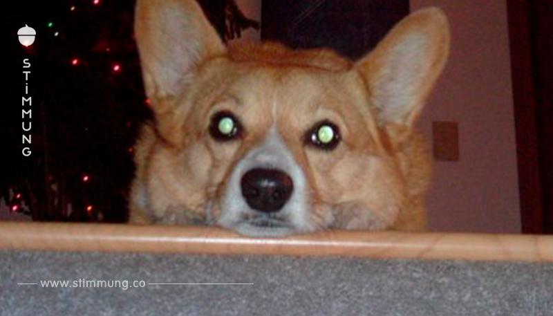 Jede Nacht starrt der Hund den Mann stundenlang an. Als der erfährt, was sein früherer Besitzer getan hat, fängt er an zu weinen.