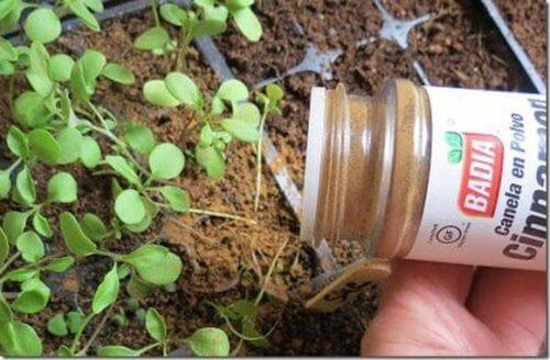"""Was geschieht, wenn du deine Pflanzen mit Zimt """"würzt""""?"""