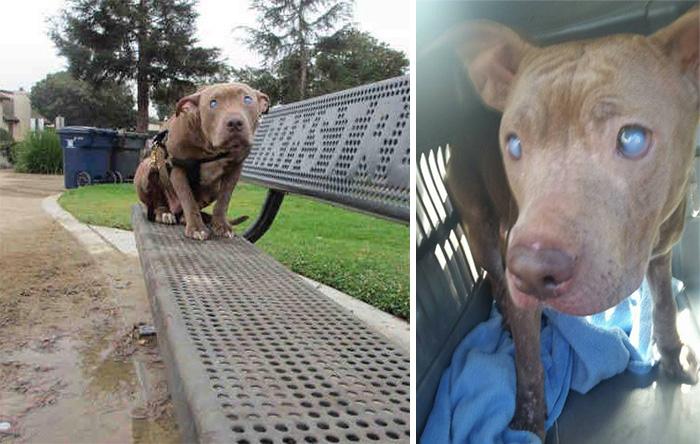 Ein blinder Hund wurde sofort nach der Geburt auf einer Bank im Park gelassen ...
