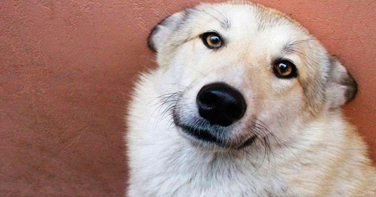 Der Hund hat das 2-jährige Baby für 2 Tage gewärmt, wessen Mutter es im Frost  gelassen hatte, damit es stirbt