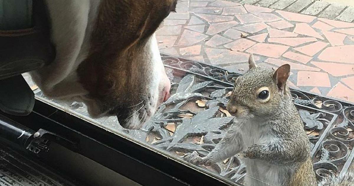 Die Familie rettete das Eichhörnchen und 8 Jahre später kehrte sie zurück, um ihnen etwas Wichtiges zu zeigen