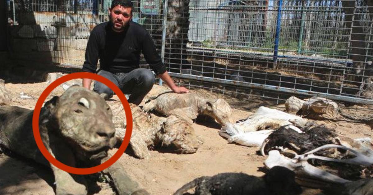 Als die Helfer im Zoo ankommen, schlägt ihnen ein furchtbarer Geruch entgegen. Als sie sehen, was hier passiert ist, müssen sie weinen.