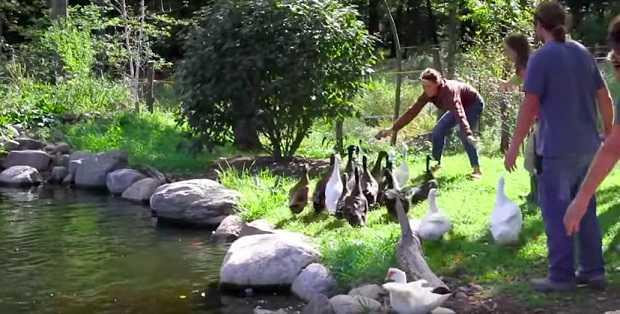Die Enten waren noch nie im Wasser – schau dir ihre Reaktion an, als die das erste Mal plantschen!