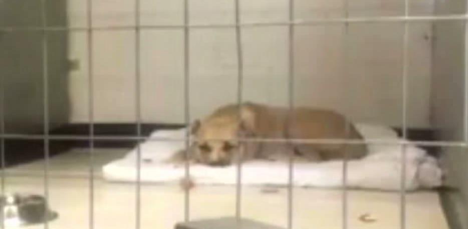 Der vernachlässigte Hund wollte nur noch schlafen und sich nicht bewegen – bis dieser Junge kam