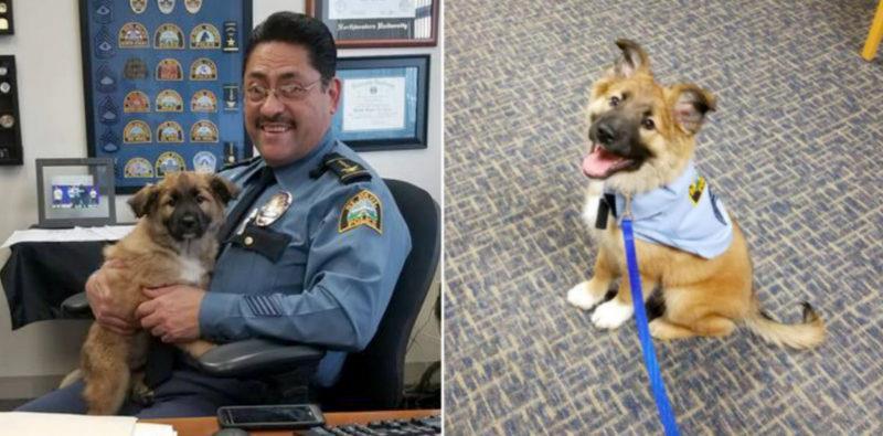 """Dieser gerettete Welpe wird nun als """"Kuschelagent"""" auf der Polizeistation eingesetzt"""