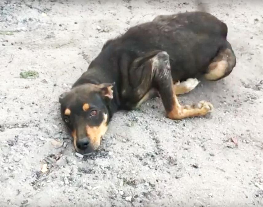 Der hoffnungslose Hund leckte die Hände aller, die sich ihm näherten ... Er wollte leben!