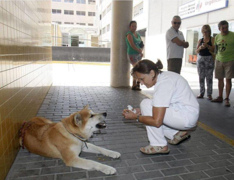 Dieser Hund kam zur Tür des Krankenhauses. Als das Krankenhauspersonal den Grund herausfand, konnten sie  ihre Tränen nicht zurückhalten!