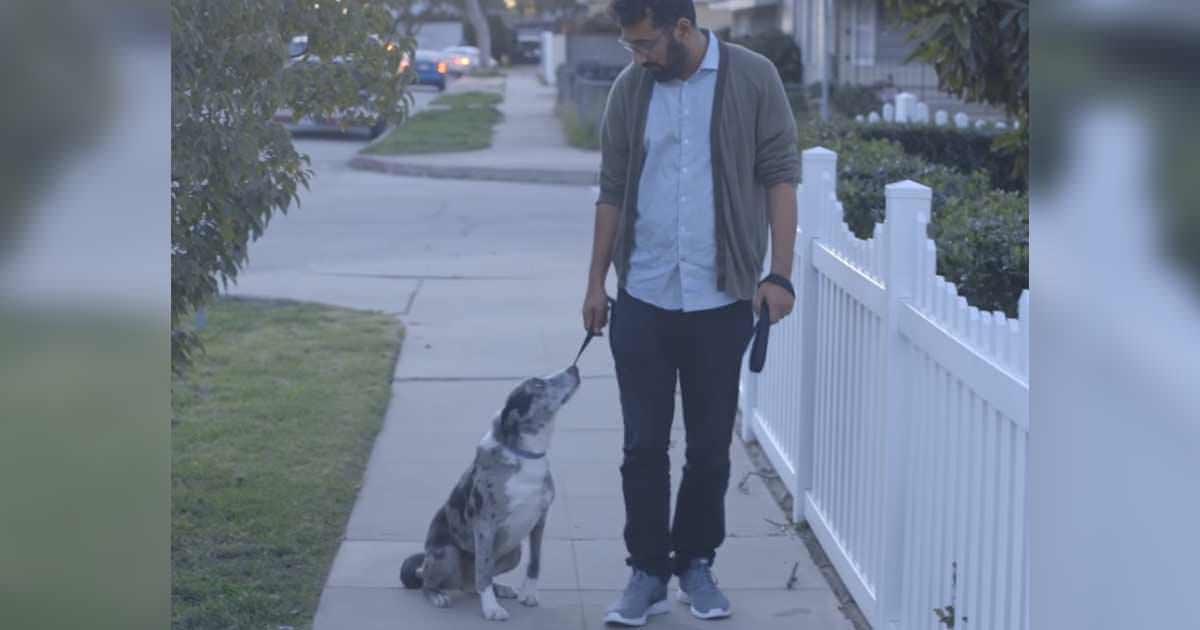 Er adoptiert alten Hund – eines Tages bleibt das Tier stehen und blickt tief in seine Augen