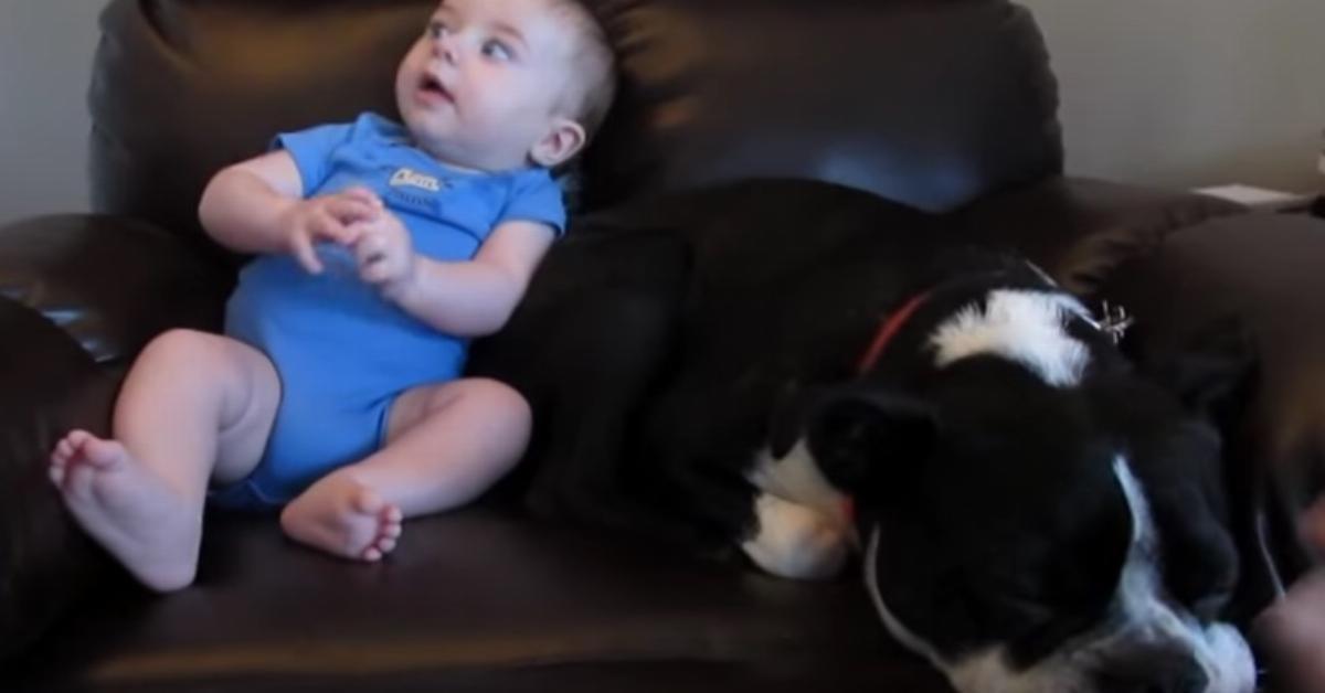 Das Baby im Sessel macht in die Windel. Doch achte auf den Hund neben ihm – ich heule vor Lachen!