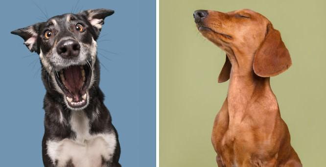 Unglaublich lustige Foto Emotionen von Hunden!