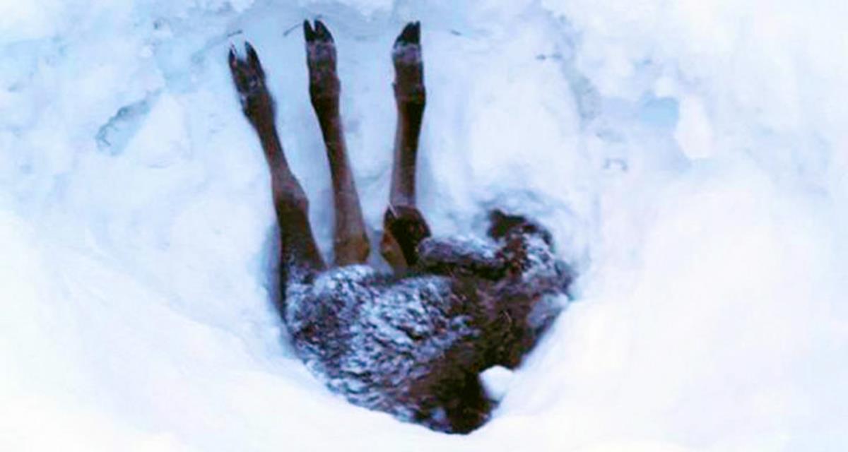 Nur die Beine ragten aus der Schneewehe ... Der Fahrer stoppte das Auto und begann zu graben. Gut gemacht!