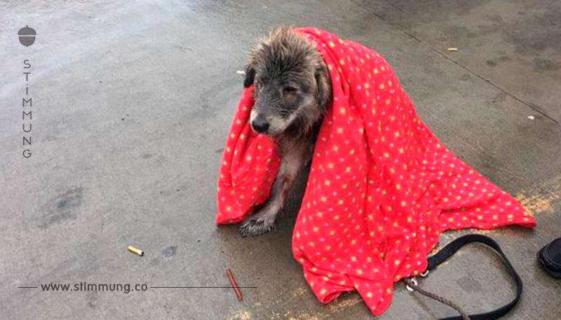 Verlassenes Hündchen zittert vor Verzweiflung im Regen – bis eine Tierfreundin vorbeikommt und ihr jede Angst nimmt