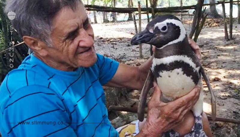 Dieser Pinguin schwimmt jedes Jahr 8000 km um den Mann zu sehen, der ihm das Leben rettete.