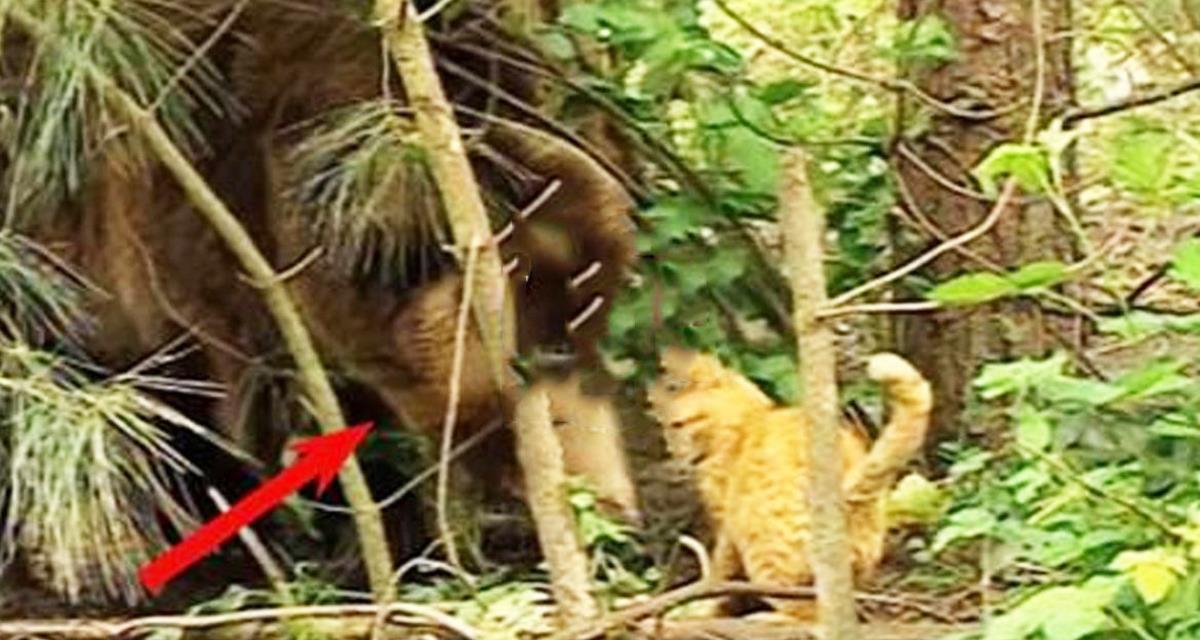 Diese unverschämte Katze stahl Nahrung von einem Grizzlybär. Die Reaktion des Tieres wird Sie überraschen!