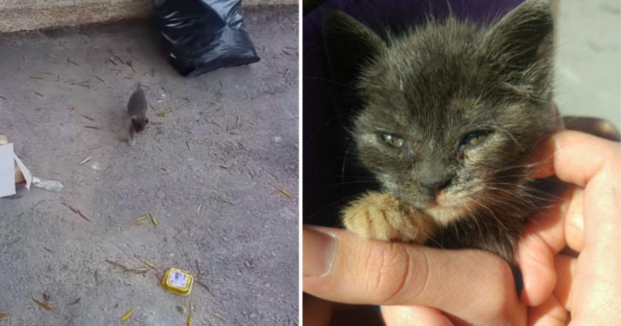 Frau findet Kätzchen inmitten des Hotelmülls und zögert keine Sekunde, die Sache in die eigene Hand zu nehmen