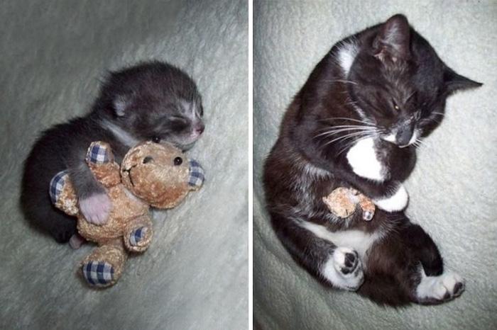 Tiere mit ihren Lieblingsspielzeugen - vor und nach dem Aufwachsen!