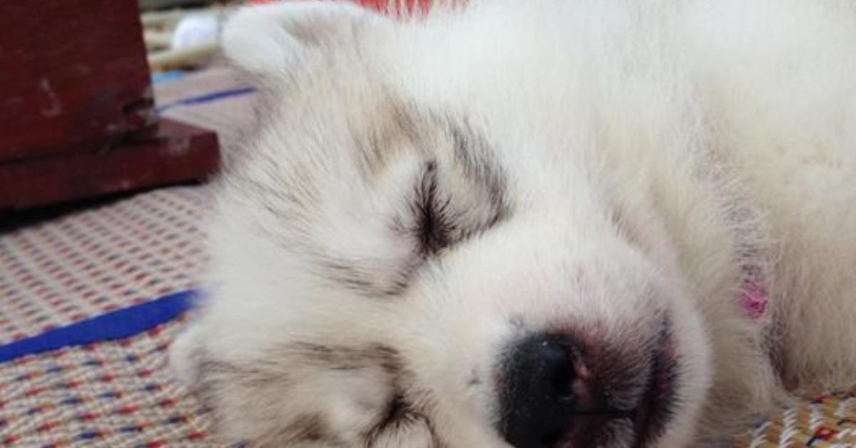 Bei der Geburt sind alle von dem süßen Hund entzückt. Als sie allerdings die Pfoten sehen, wird er sofort weggegeben.