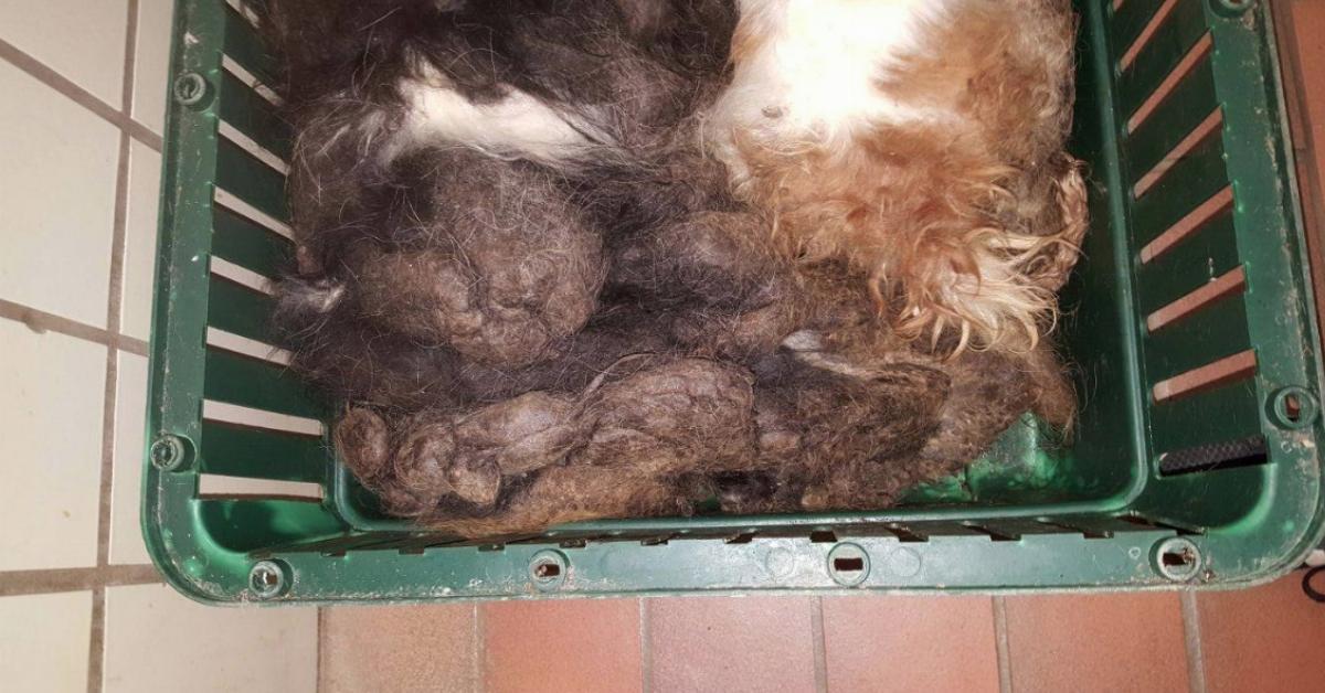 Die 2 völlig verfilzten Hunde werden einfach in den Müll gestopft. Was sich unter ihrem Fell verbirgt, können die Tierretter erst gar nicht sehen.