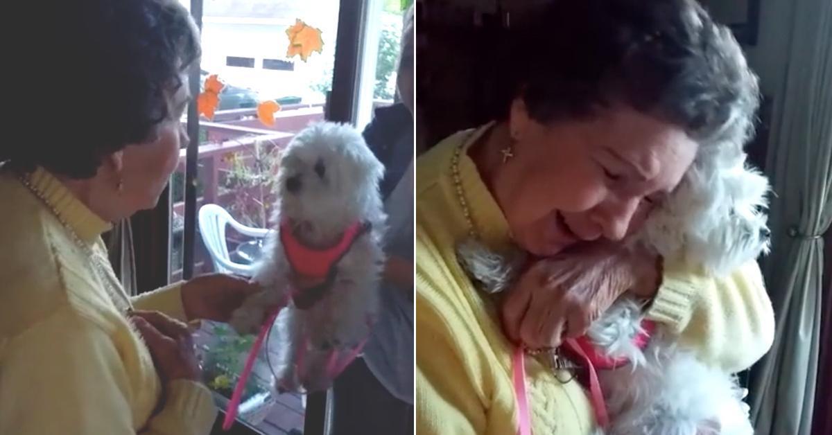 Arglos nimmt die 90 Jährige den Welpen auf den Arm. Auf das, was dann kommt, ist sie nicht vorbereitet.