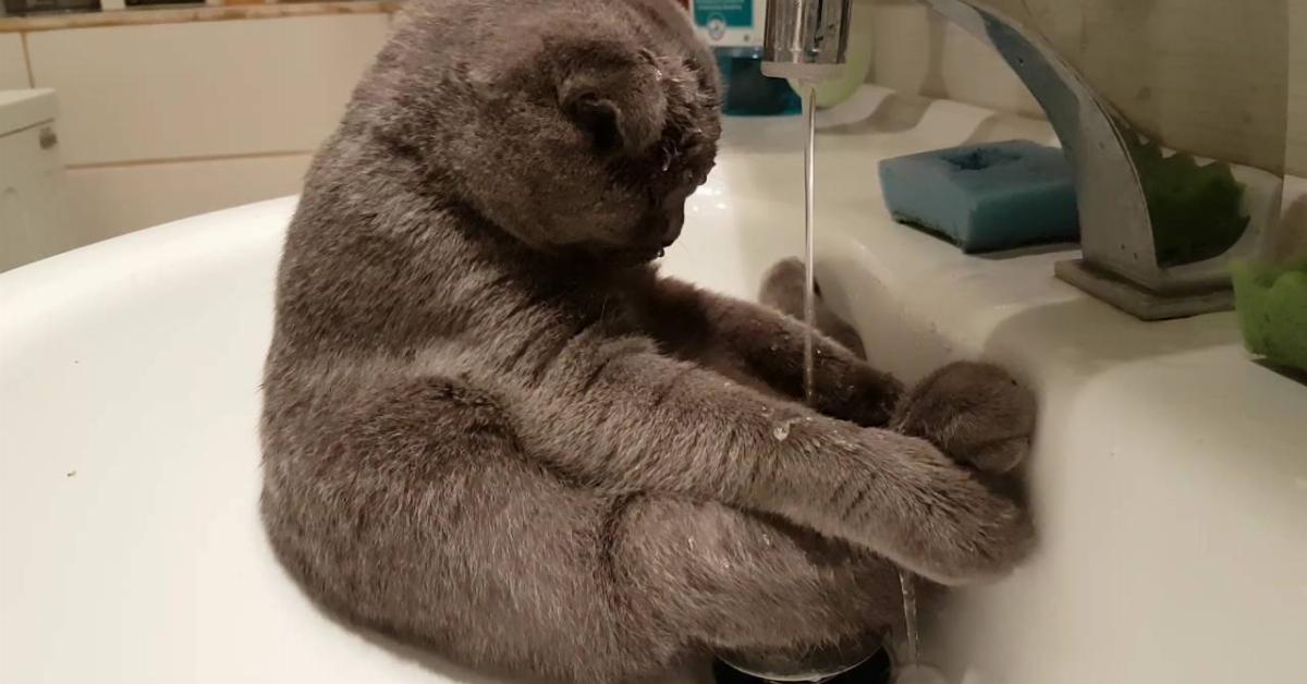 Die Katze sitzt im Waschbecken, während der Wasserhahn läuft. Was sie bei 0:12 macht, lässt ihr Frauchen herzlich lachen.