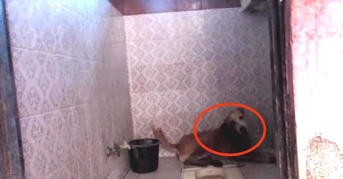 Die Würmer fressen ihn bei lebendigem Leib. Als die Familie die Badezimmertür öffnet, packt sie das Grauen.