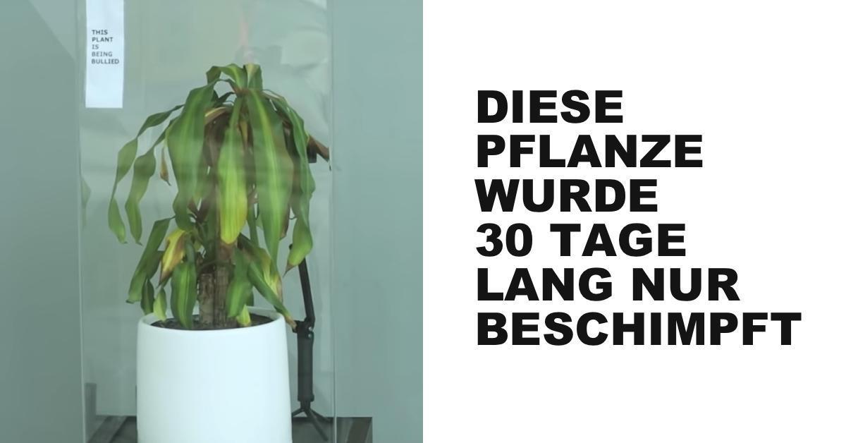 Mobbingexperiment an Pflanzen zeigt fatale Auswirkung.