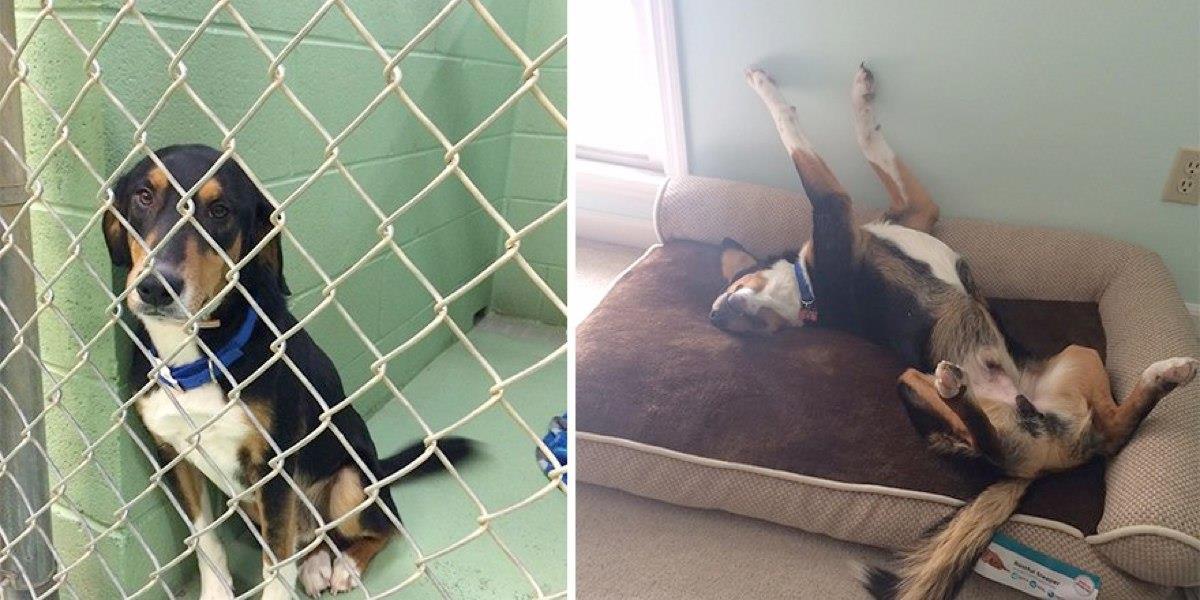 16 Vorher-Nachher-Bilder von Tieren im Tierheim und nach ihrer Adoption. Ein Unterschied wie Tag und Nacht!