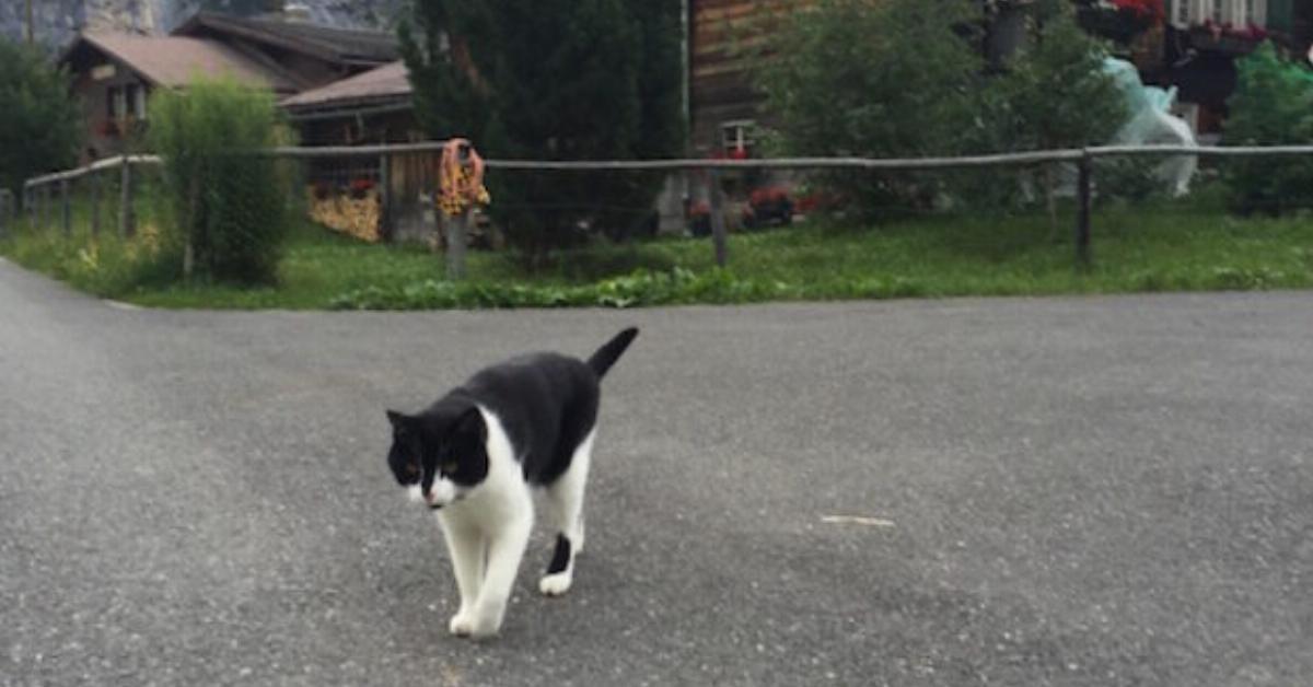 Stolz und elegant bewegt sich die Katze auf den Wanderer zu. Damit rettet sie ihm das Leben.