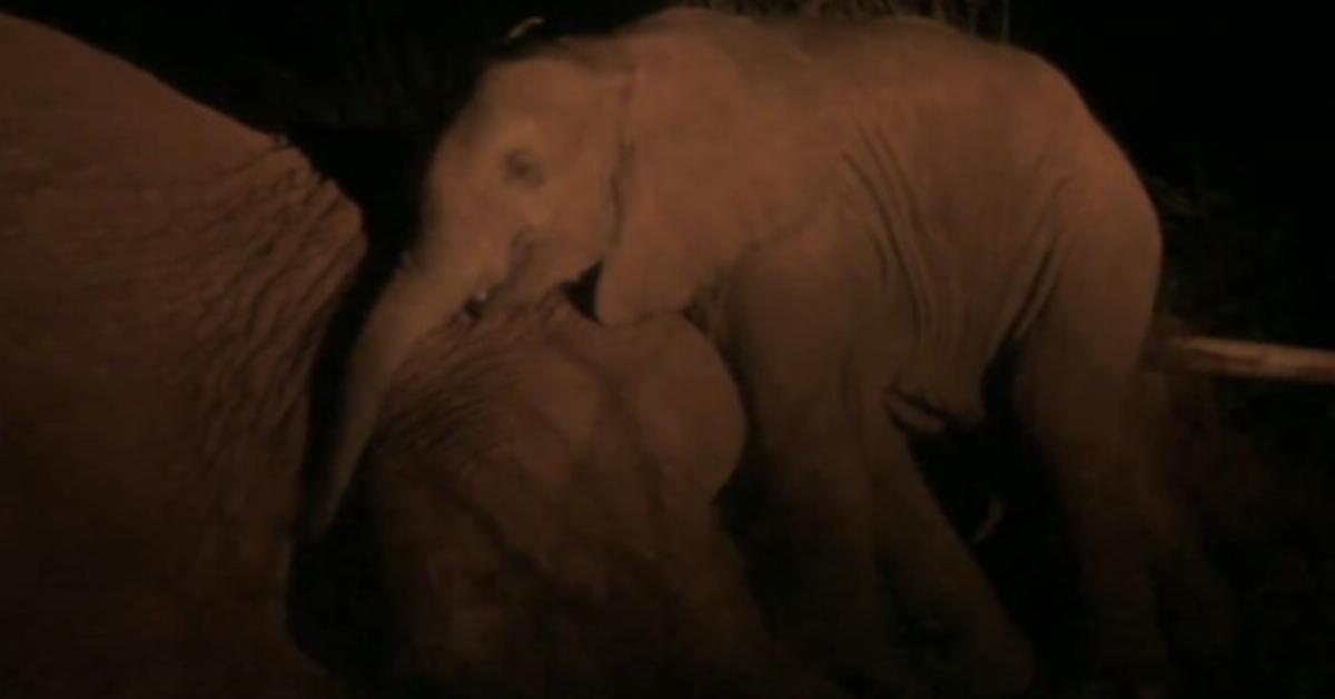 Die Elefantenmutter weiß, dass sie die Nacht nicht überleben wird. Was sie dann mit ihrem Baby macht, rührt die Wildhüter zu Tränen.