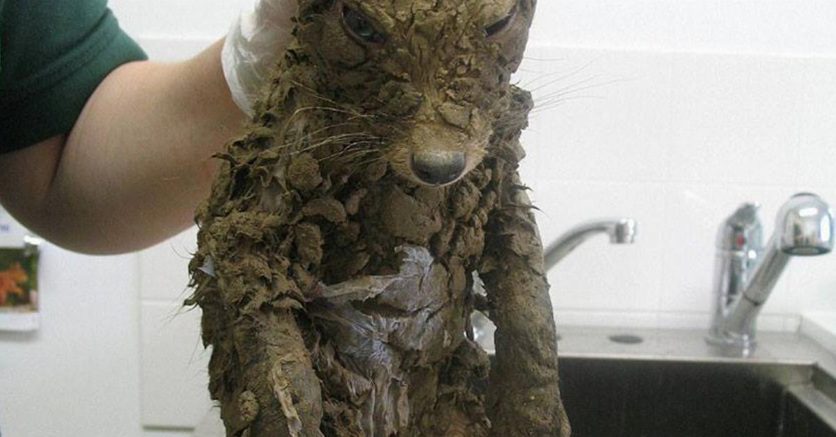 Bauarbeiter ziehen das unerkennbare Tier aus dem Schlammloch. Erst als sie es abwaschen bemerken sie, was sich unter dem Schmutz verbirgt.