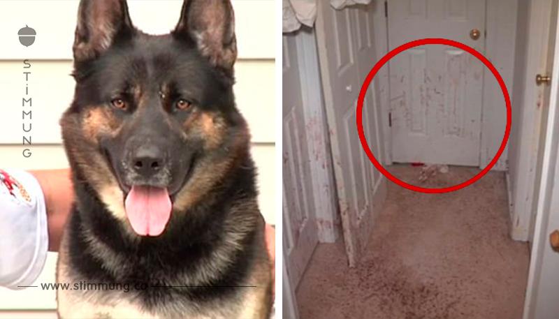 Beim Nachhausekommen finden die Hausbesitzer ihre Wände mit Blut bespritzt vor.