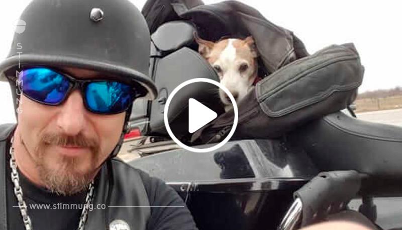Das Herrchen warf den Hund aus dem Auto – schaue dir an, was der Motorradfahrer macht!