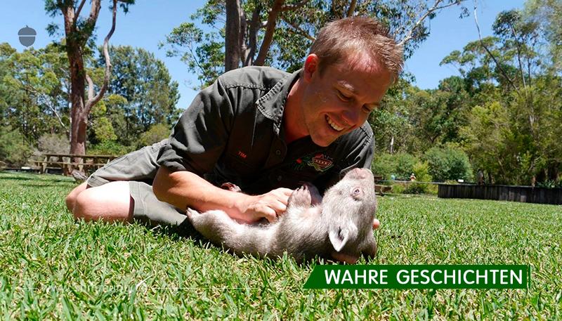 Der kleine Wombat tritt nicht einen einzigen Schritt von seinem Retter weg!