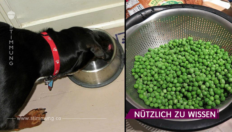 Gesunde Nahrung, die Sie Ihren Hund füttern sollten!