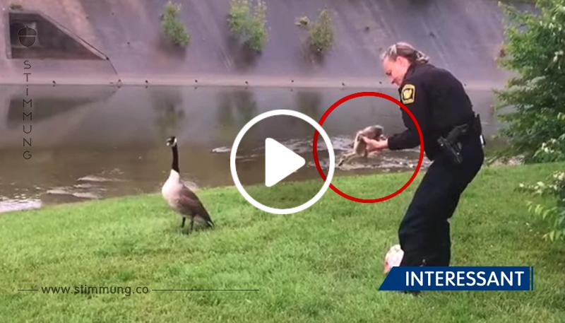 Die Gans selbst fand einen Polizisten und führte ihn zu ihrem Baby.